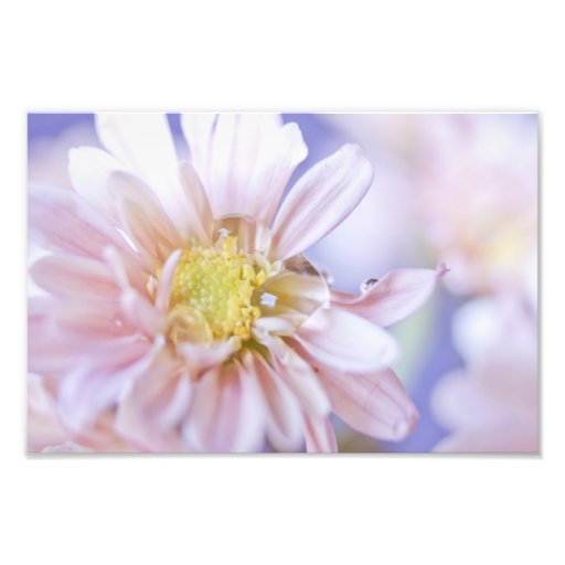 Pastel Flower and Water Drop Photograph