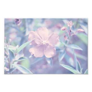 Pastel Flower Photo Print