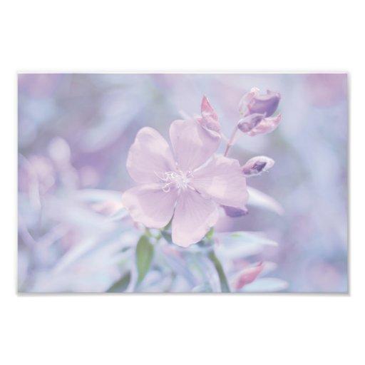 Pastel Flower Art Photo