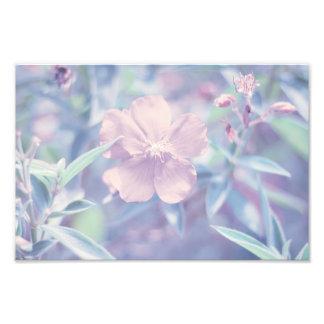Pastel Flower Photograph