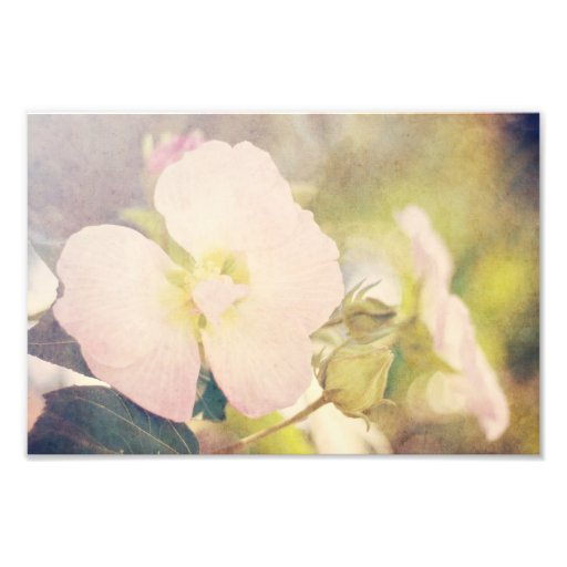 Pastel Flower Photography Photograph