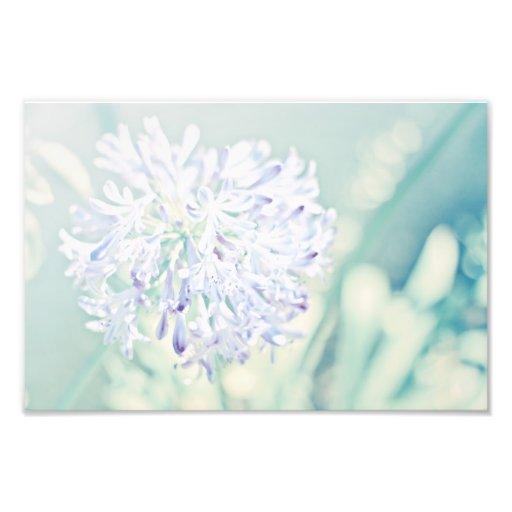 Pastel Flowers Photo Art