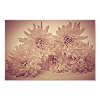Pastel Flowers Photograph