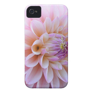 Pastel Hued Dahlia Case-Mate iPhone 4 Cases