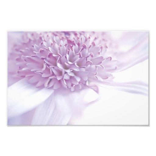 Pastel Lavender Flower Photograph