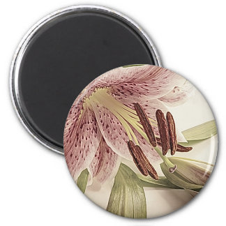 Pastel Lilly. Magnet