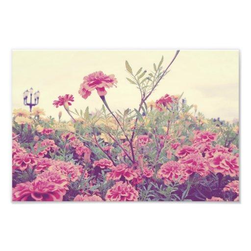 Pastel Marigolds Photo