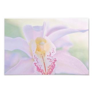 Pastel Orchid Art Photo