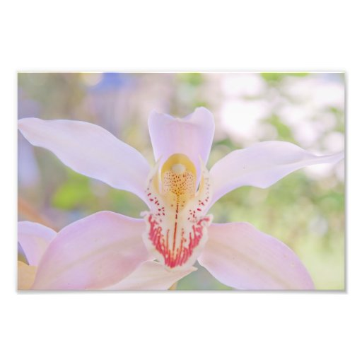 Pastel Orchid Photo Art