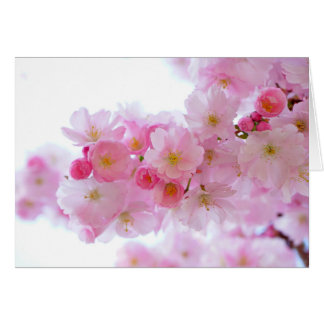 Pastel Pink Cherry Blossoms Card