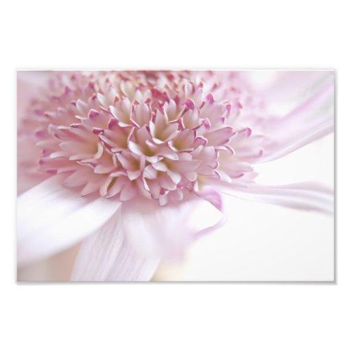 Pastel Pink Flower Photo Art