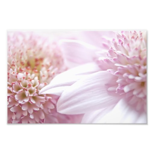 Pastel Pink Flowers Photograph