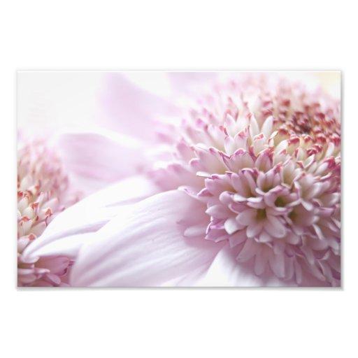 Pastel Pink Flowers Photo
