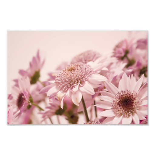 Pastel Pink Flowers Art Photo