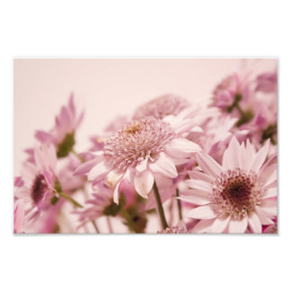 Pastel Pink Flowers Photographic Print