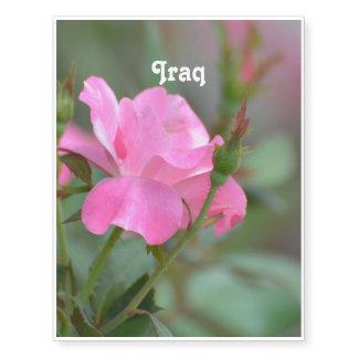 Pastel Pink Rose in Iraq