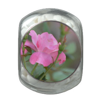Pastel Pink Rose in Iraq Glass Candy Jars