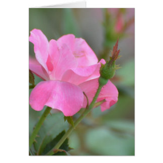 Pastel Pink Rose in Iraq Greeting Card