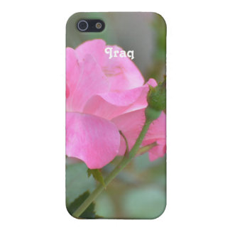 Pastel Pink Rose in Iraq iPhone 5 Cases