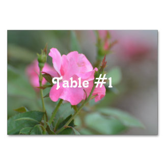 Pastel Pink Rose in Iraq Table Card