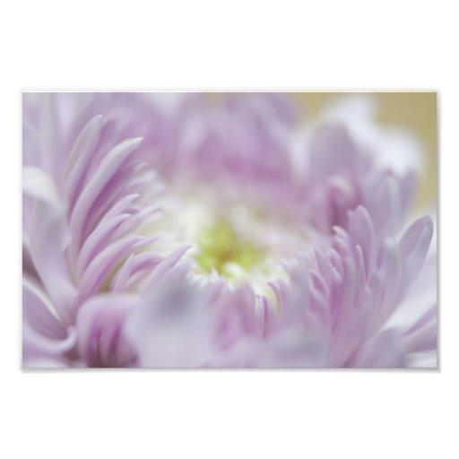 Pastel Purple Flower Photo Art
