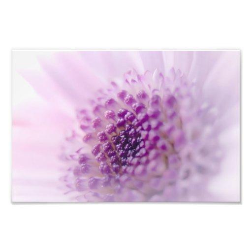 Pastel Purple Flower Photograph