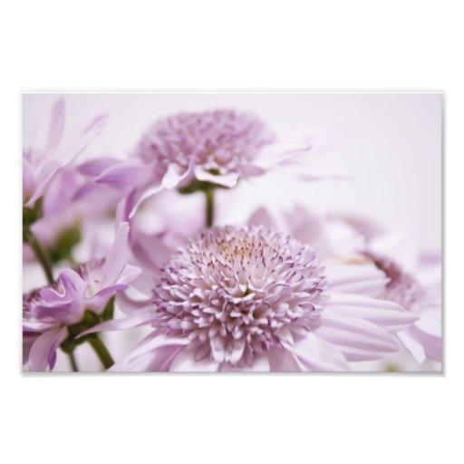 Pastel Purple Flowers Photographic Print