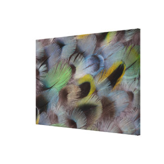 Pastel Rosella Feather Design Canvas Print