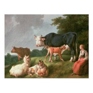 Pastoral Scene Postcard