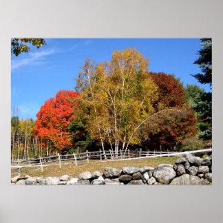 Pasture Trees in Autumn Poster