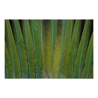 Patagonian Conure Feather Design Poster