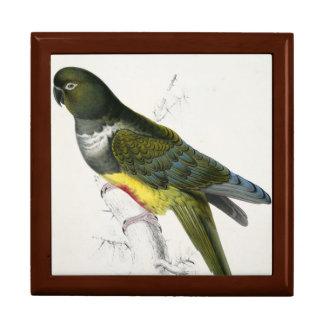 Patagonian Parakeet-Macaw Gift Box