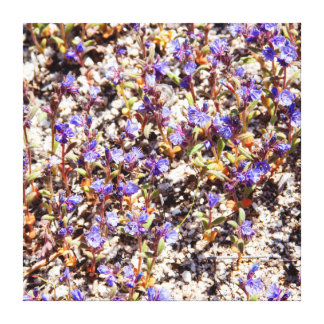 Patch of Flowers Canvas Prints