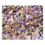 Patch of Flowers Photo Art
