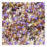 Patch of Flowers Photographic Print