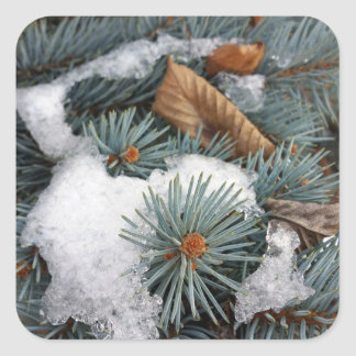 patch of snow square sticker