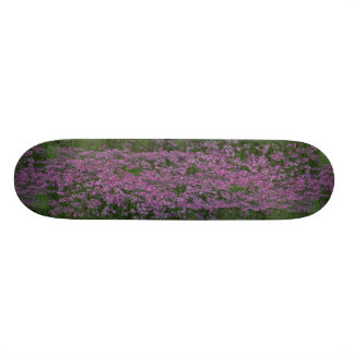 Patch of wild vorbenia in East Texas Skate Deck