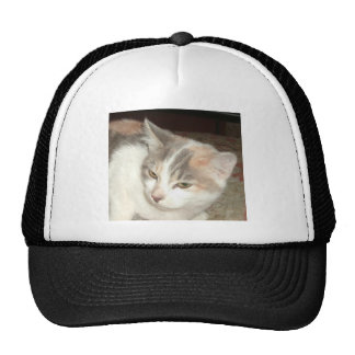 Patches the Kitten Cap