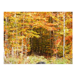 Path In The Woods Adirondacks Mountains Postcard