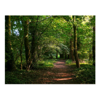 Path in the Woods Postcard
