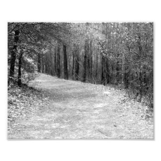 Path Less Traveled B&W Photo Print