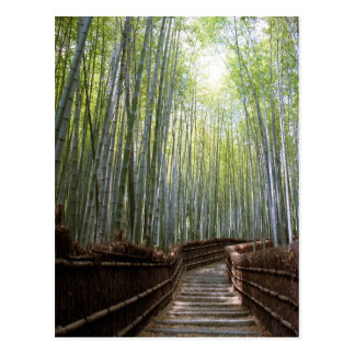 Path through the Bamboo Postcard