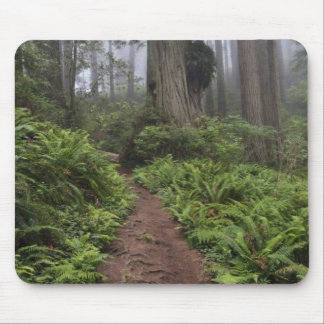 Path through the giant redwood trees shrouded 2 mouse pad