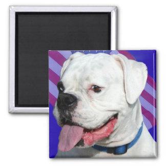 Patriotic white boxer magnet