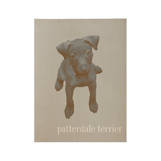Patterdale Terrier Aged Photograh Poster