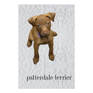 Patterdale Terrier Puppy Poster - Crumpled Paper