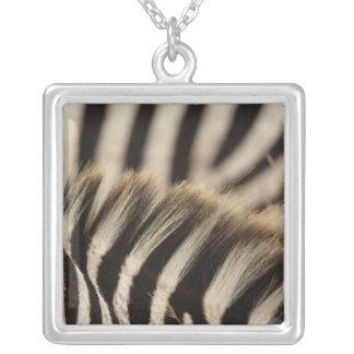 Pattern of Burchell's Zebra stripes, Equus Square Pendant Necklace