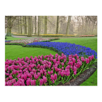 Pattern of Grape Hyacinth, tulips, and 2 Postcard