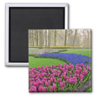 Pattern of Grape Hyacinth, tulips, and 2 Square Magnet