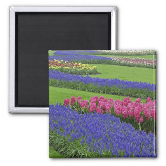 Pattern of Grape Hyacinth, tulips, and Square Magnet